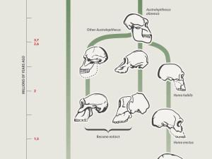 Homo Sapiens Evolution Infographic